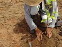 Native Tree Species Reforestation_Keegan Eisenstadt